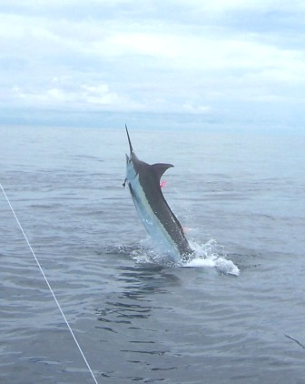 Billfish Agreement is Signed with OSPESCA and TBA