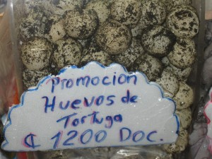 Selling Costa RicaTurtle Eggs