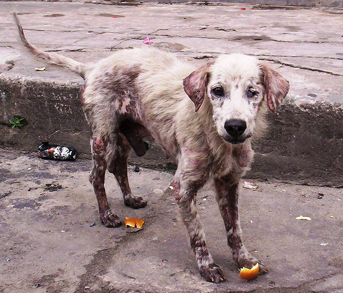 Dogs In Costa Rica – Stray, Puppy Mills and Abuse